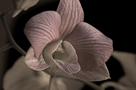 Orchid #1
